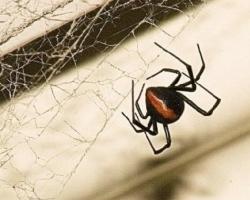 世界十大最毒蜘蛛:遇见了千万要躲开